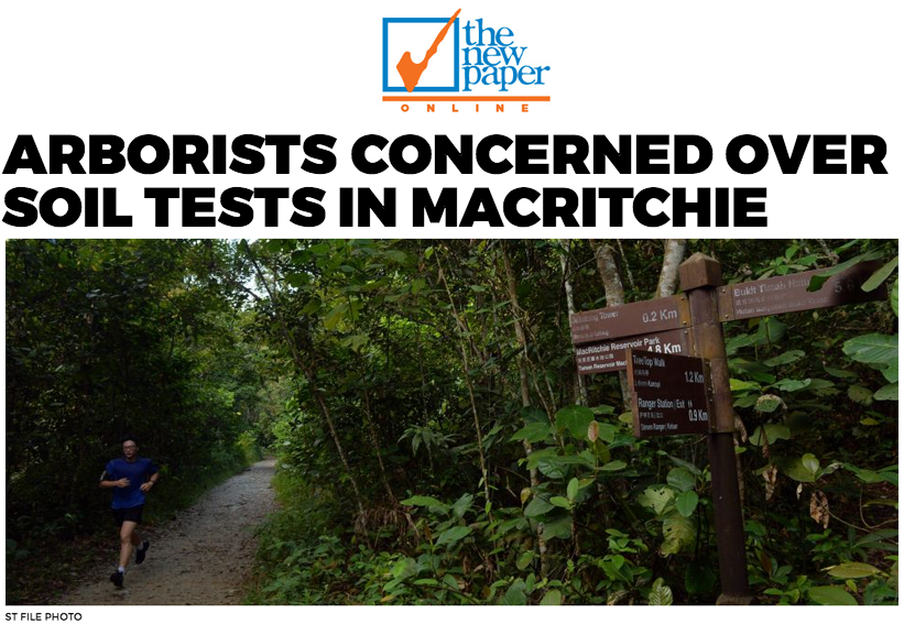 TNP 2016 - Arborists concerned over soil tests in MacRitchiem