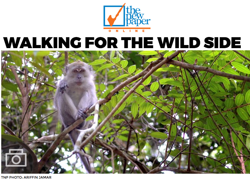 The Newpaper 2016 - Walking for the wild side
