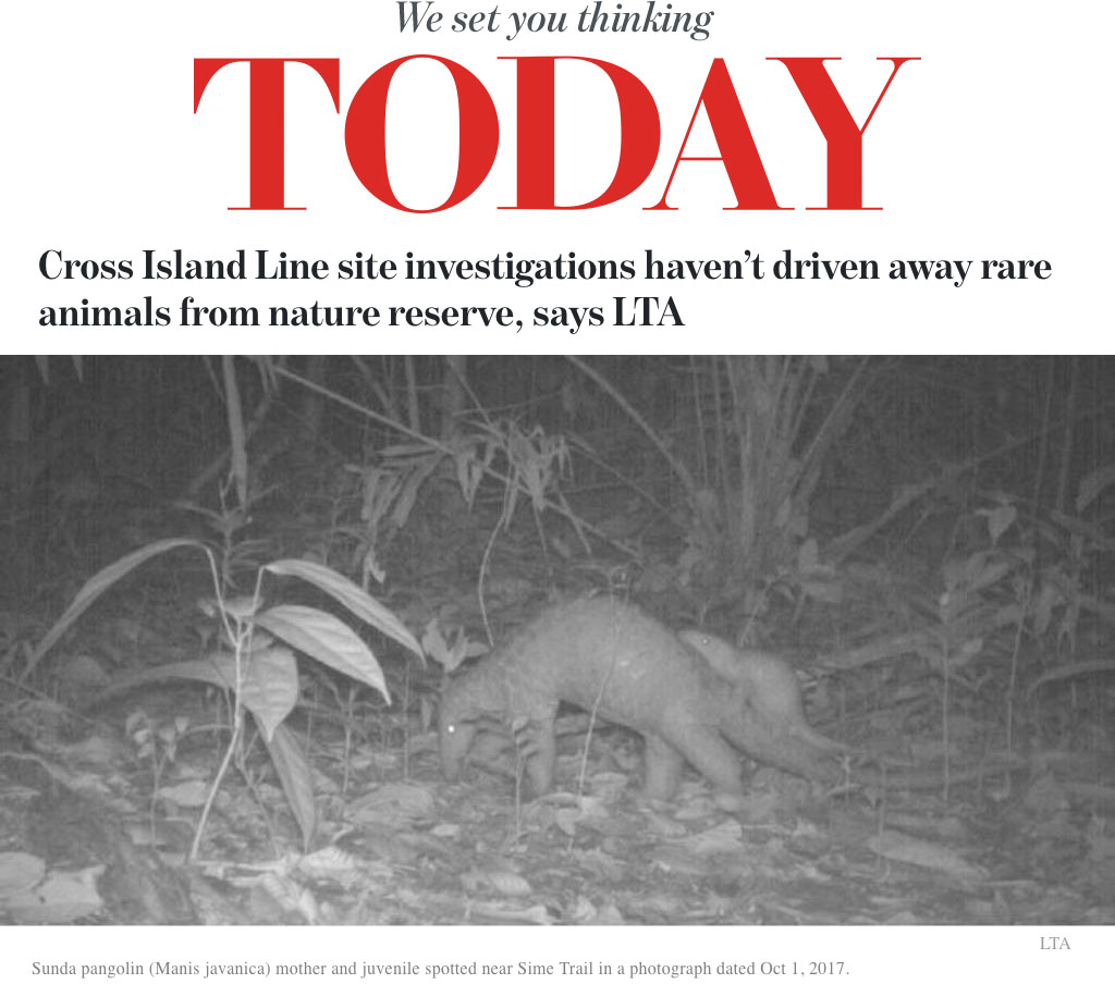 Today Online - Cross Island Line site investigations haven't driven away rare animals from nature reserve, says LTA